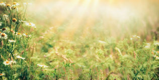 Beautiful late summer outdoor nature background with Wild herbs and flowers on meadow with sunbeams stock photography