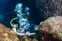 Beautiful latina diver girl while touching a fish Stock Image