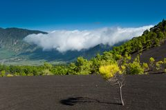 Beautiful lava landscape in La Palma. Beautiful lava landscape on the Cumbre Nueva in La Palma, Canary islands, Spain Stock Photography