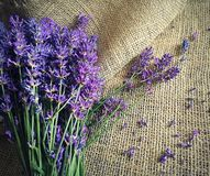 Beautiful lavander on canvas. Beautiful bouquet of lavander flowers on the old canvas Stock Photography