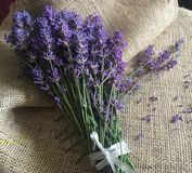 Beautiful lavander on canvas. Beautiful bouquet of lavander flowers on the old canvas Royalty Free Stock Photos