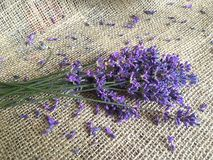 Beautiful lavander on canvas. Beautiful bouquet of lavander flowers on the old canvas Royalty Free Stock Image
