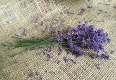 Beautiful lavander on canvas. Beautiful bouquet of lavander flowers on the old canvas Stock Image
