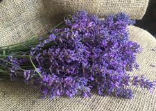 Beautiful lavander on canvas. Beautiful bouquet of lavander flowers on the old canvas Stock Images