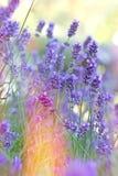 Beautiful lavende Royalty Free Stock Photos