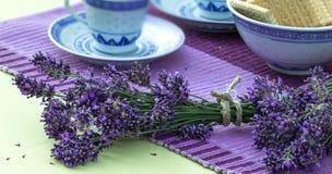 Beautiful lavender Stock Images