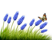 Beautiful lavender background with a butterfly. Royalty Free Stock Photo