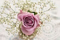 Beautiful lavender color rose with gypsophilla -top view Royalty Free Stock Photos