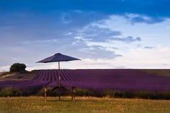 Beautiful lavender field landscape Stock Photo