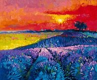 Beautiful lavender field at sunset. Original oil painting on canvas.Modern art Royalty Free Stock Photography