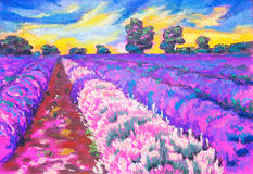 Beautiful lavender field at sunset. Royalty Free Stock Photos