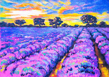 Beautiful lavender field at sunset. Stock Photo