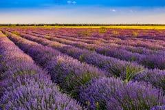 Beautiful lavender fields near Stara Zagora Bulgaria.  stock image