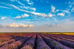 Beautiful lavender fields near Stara Zagora Bulgaria.  royalty free stock images
