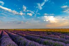 Beautiful lavender fields near Stara Zagora Bulgaria.  royalty free stock image