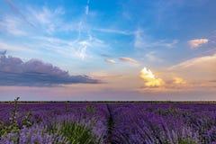 Beautiful lavender fields near Stara Zagora Bulgaria.  stock photography