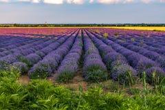 Beautiful lavender fields near Stara Zagora Bulgaria.  stock images
