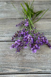 Beautiful lavender flowers on the boards Royalty Free Stock Photography