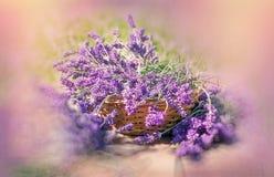 Beautiful lavender flowers in wicker basket Royalty Free Stock Photo