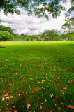 Beautiful lawn_xishuangbanna_yunnan Royalty Free Stock Images