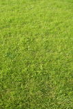 Beautiful lawn Royalty Free Stock Images
