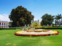 Beautiful lawn in the park. Landscape design Stock Photography