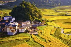 Terrace at guizhou china. The Beautiful layer of mountain and nature in rice field on terrace of Guizhou china Stock Photography