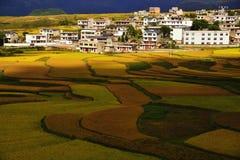 Terrace at guizhou china stock photos