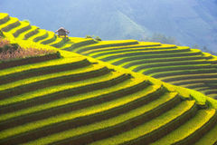 The Beautiful layer of Mountain and nature in rice terrace of Vietnam Landscape. The Beautiful layer of mountain and nature in rice field on terrace of Vietnam stock photos
