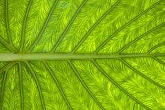 A beautiful leaf stock image