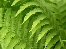 Beautiful leaf Stock Image