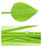 Beautiful leaf Royalty Free Stock Images