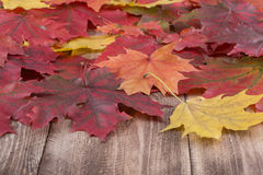 Beautiful leaf fallen from a maple.  royalty free stock images