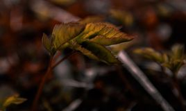 Beautiful leaf in a gloomy dark forest stock image