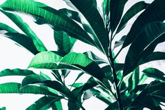 Beautiful leaf leaves texture pattern backgrounds ideas royalty free stock images
