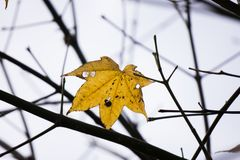 The last leaf. Beautiful leaf in the morning sun at Dalat, Vietnam Royalty Free Stock Photos