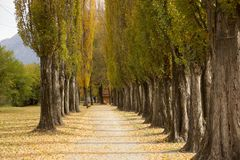 Leaf road from Switzerland Stock Photo