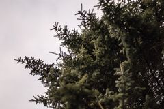 A beautiful leafy tree with grey sky stock images