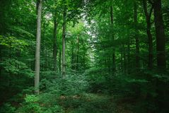 Beautiful leafy trees in forest. In Wurzburg Germany royalty free stock photo