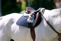 Beautiful leather saddle on back of a horse Royalty Free Stock Photos