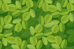 Beautiful leaves Stock Photography
