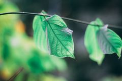 Beautiful Leaves Background with Shallow Depth of Field Royalty Free Stock Photos
