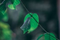 Beautiful Leaves Background with Shallow Depth of Field Stock Photo