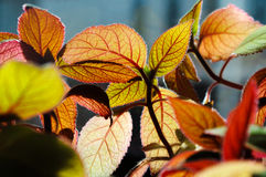 Beautiful leaves Stock Photos