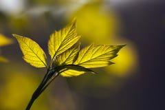Beautiful leaves Royalty Free Stock Photo