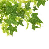 Beautiful Leaves Floral Border Stock Images
