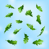 Beautiful leaves. Green oak leaves against the sky.  objects. Flying leaves Royalty Free Stock Photos