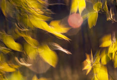 Beautiful Leaves In The Wind Stock Photos