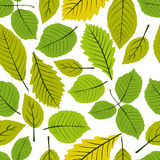Beautiful leaves seamless pattern, vector natural endless backgr Royalty Free Stock Photos