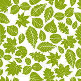 Beautiful leaves seamless pattern, vector natural endless backgr Royalty Free Stock Image